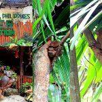 【菲律賓薄荷島景點】菲律賓眼鏡猴保護區Tarsier Conservation Area,萍子推薦菲律賓眼鏡猴世界獨有,外星人、絕地大師尤達,Philippine Tarsier Sanctuary,薄荷島必去景點 @upssmile向上的微笑萍子 旅食設影
